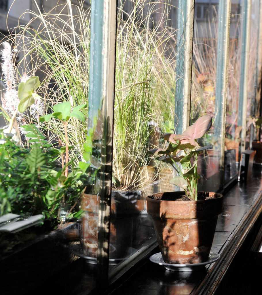 Pan. Décoration végétale Le Vert à Soi