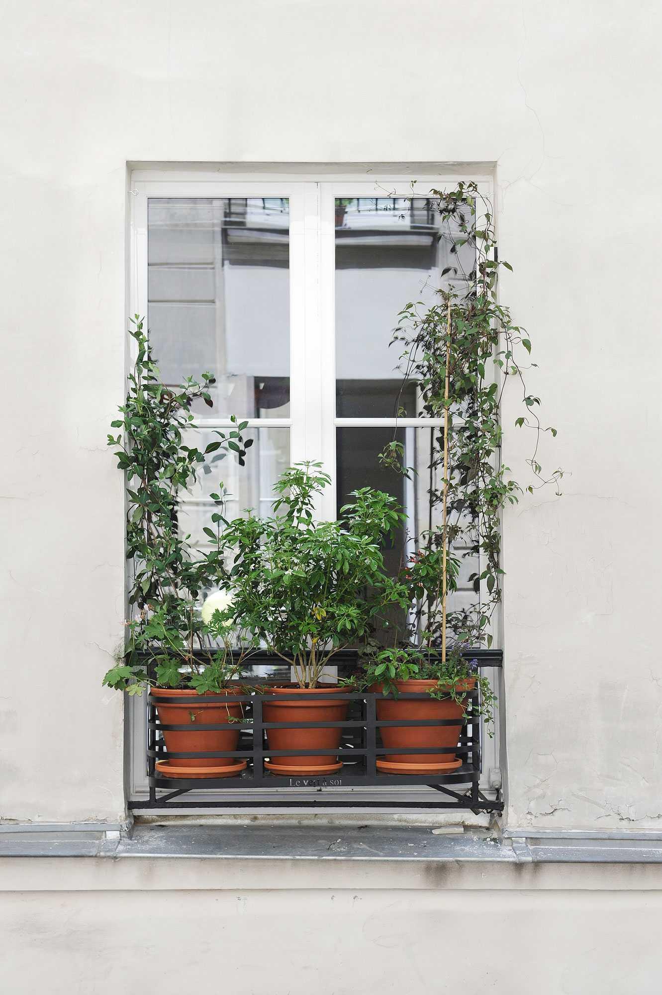 tiquetone 006 le vert soi. Black Bedroom Furniture Sets. Home Design Ideas